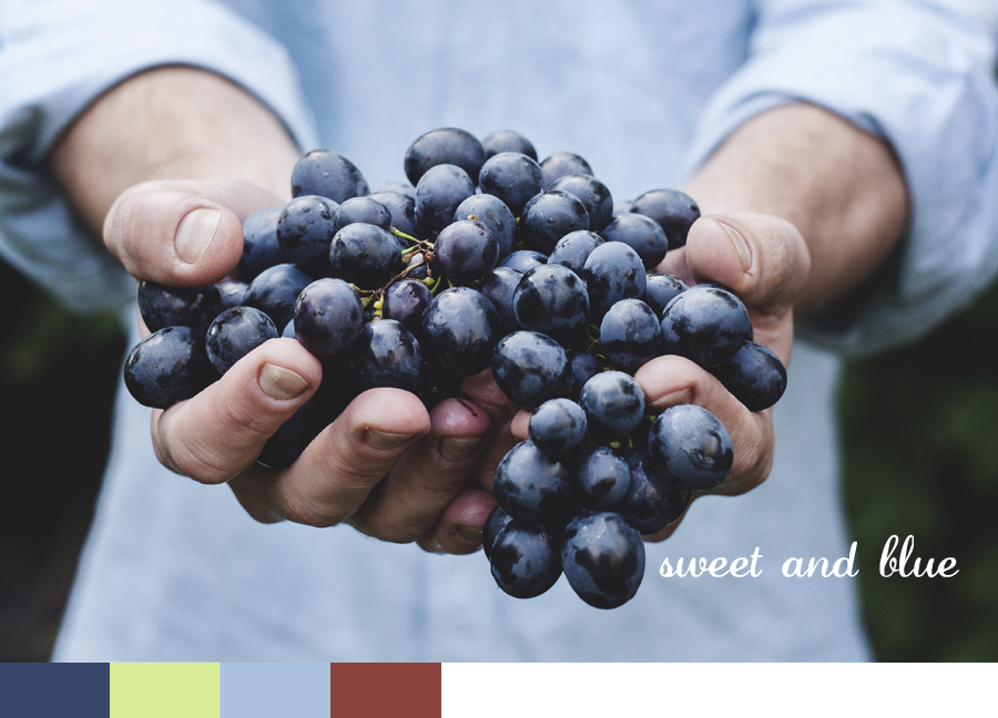 Hand Full of Dark Grapes Mood Board Sample
