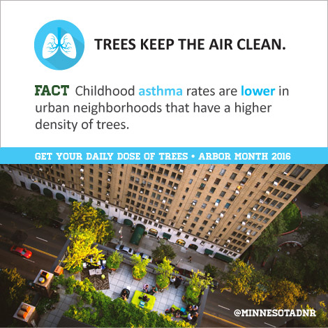 Trees Keep the Air Clean