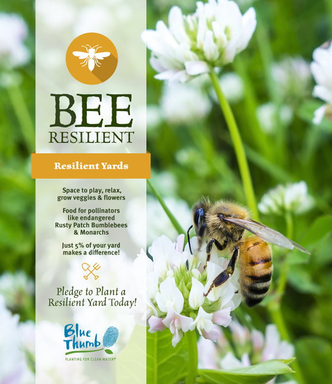 planting resilient yards grow veggies flowers feed bees help endangered rusty patch bumblebees monarchs make a difference