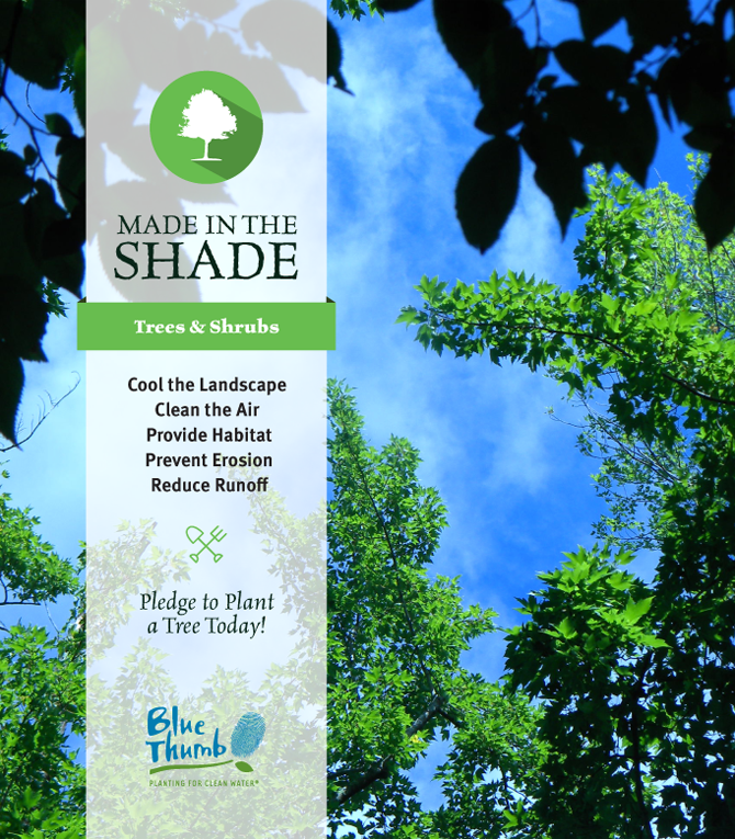 shade trees cool landscape clean air provide habitat prevent erosion reduce runoff