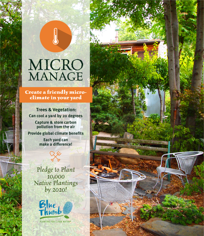 create friendly micro-climate yard
